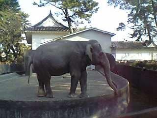 なぜか象さん