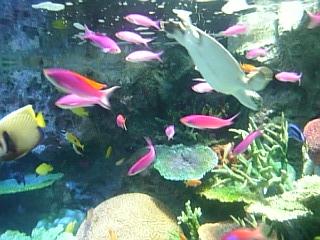 サンゴしょうの再現