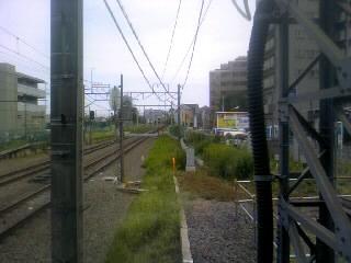 線路の夏草