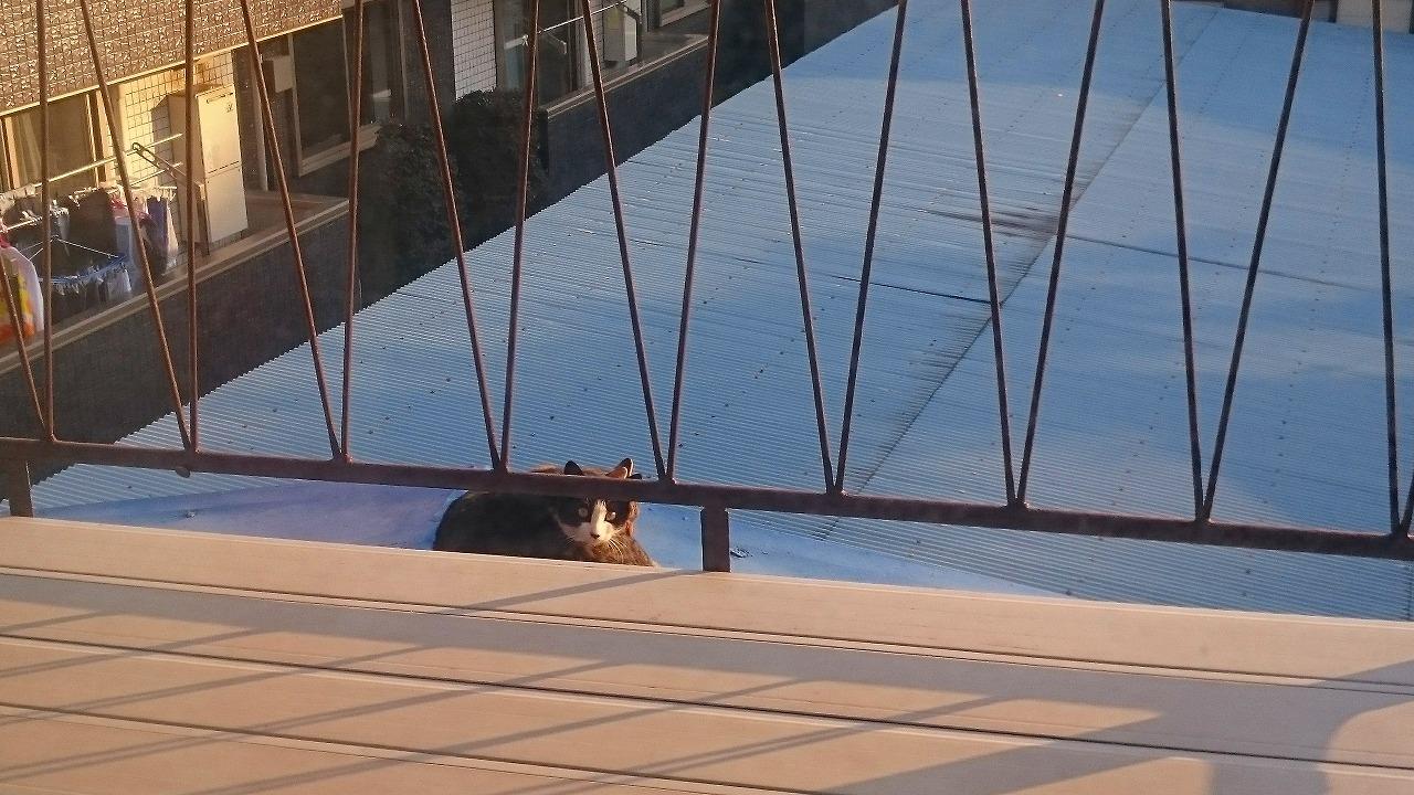 ベランダと猫