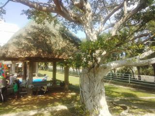 がじゅまるの木と高床式倉庫